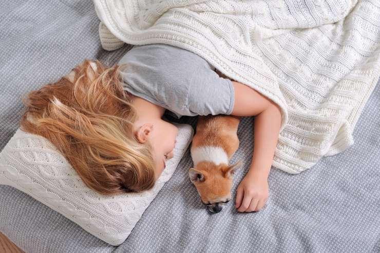 donna dorme con chihuahua