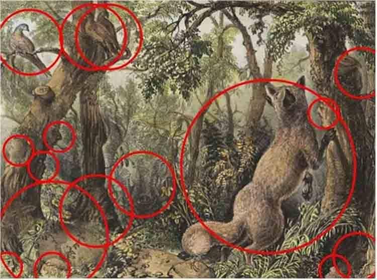 test volpe bosco