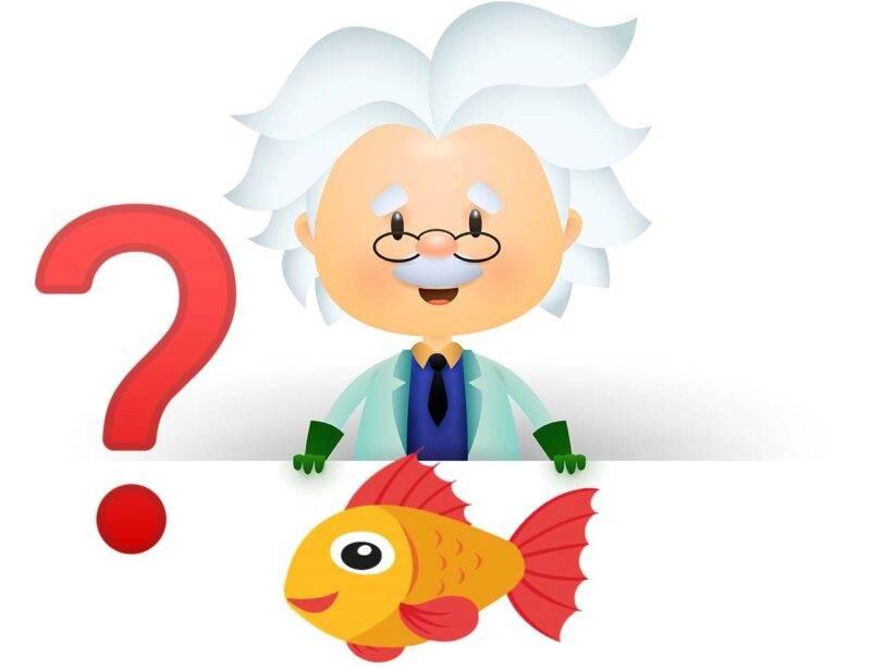 enigma Einstein