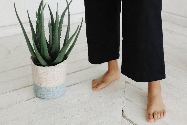 test forma del piede
