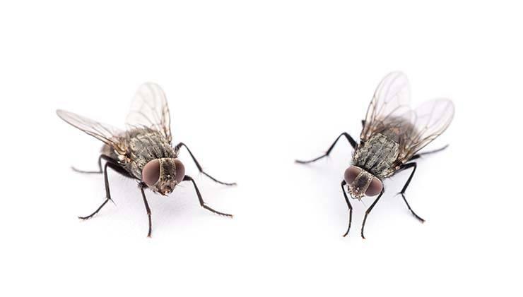 repellente mosche
