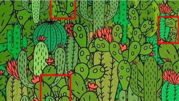 test cactus