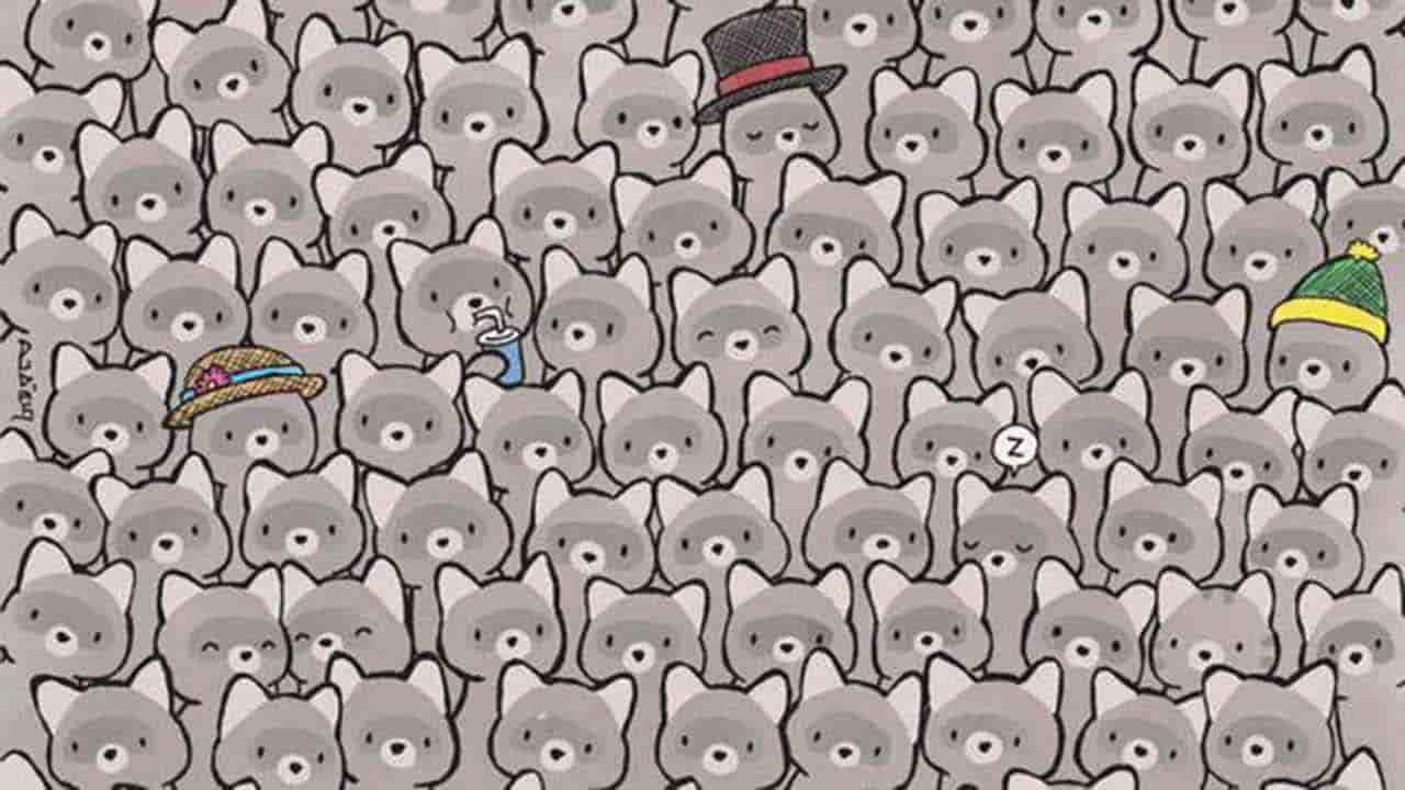 Test: in mezzo ai procioni si nasconde un gatto. Sarai in grado di vederlo?