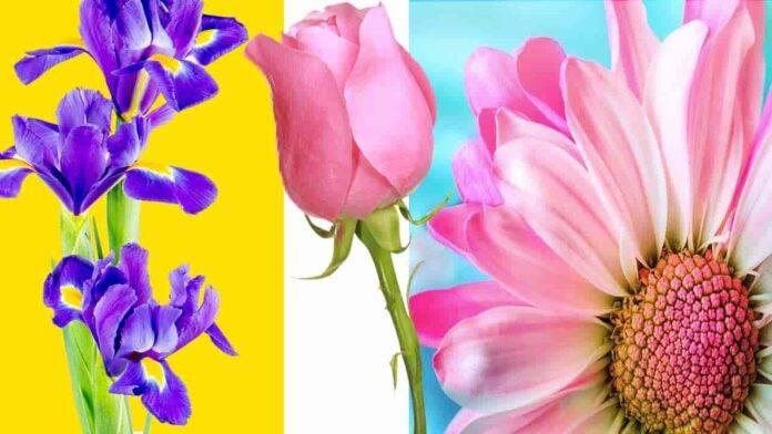 test psicologico 3 fiori