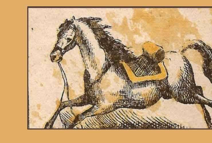 test fantino cavallo