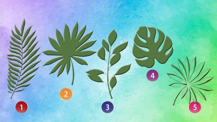 test foglie