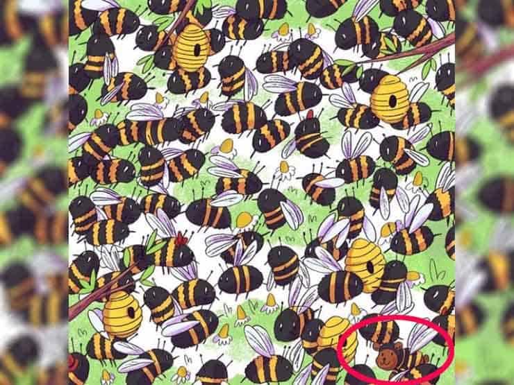 test orso tra le api