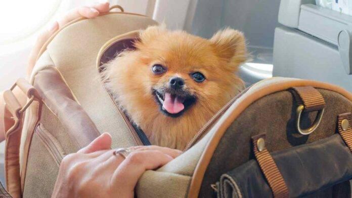 cane in valigia