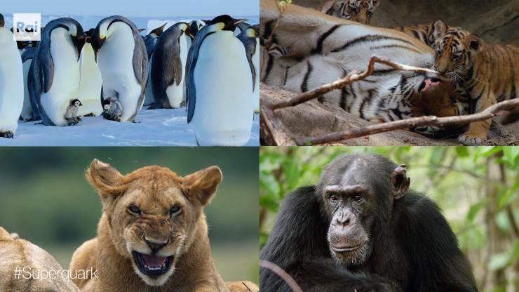 reportage animali