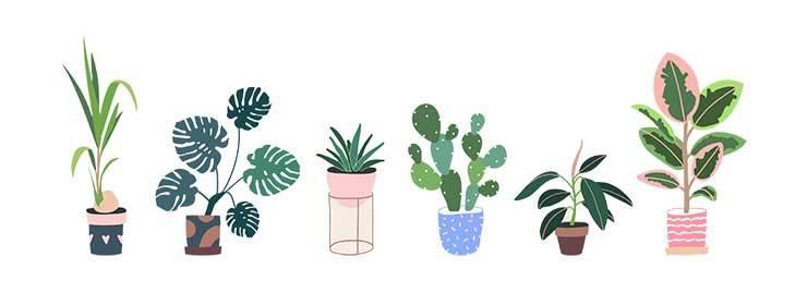 pianta perfetta segno zodiacale
