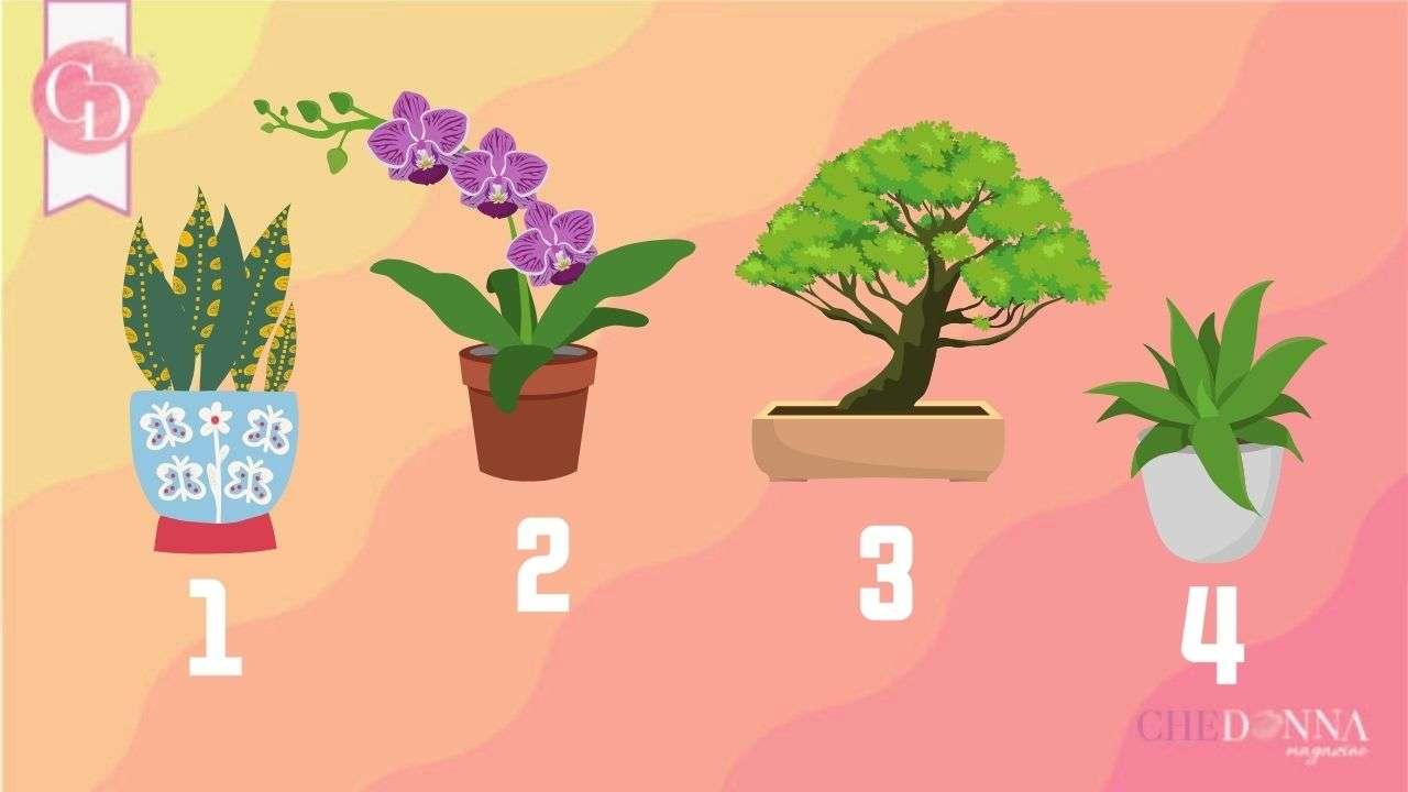 test piante da scrivania