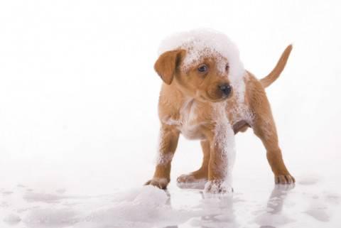 Fare il bagenetto al cane consigli e istruzioni - Come fare il bagno al cane ...