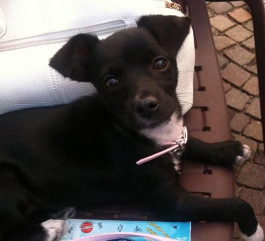 Educazione cuccioli cane impariamo ad insegnare for Educazione cane