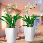 CASA e le piante mignon di tendenza