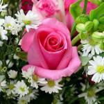 IDEE REGALO: come scegliere i fiori giusti